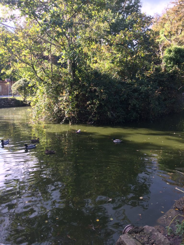 Duck Pond Shanklin
